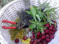 Forage_basket